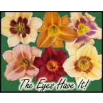 The Eyes Have It! Daylily Collection